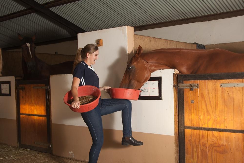 bset academy feeding horse
