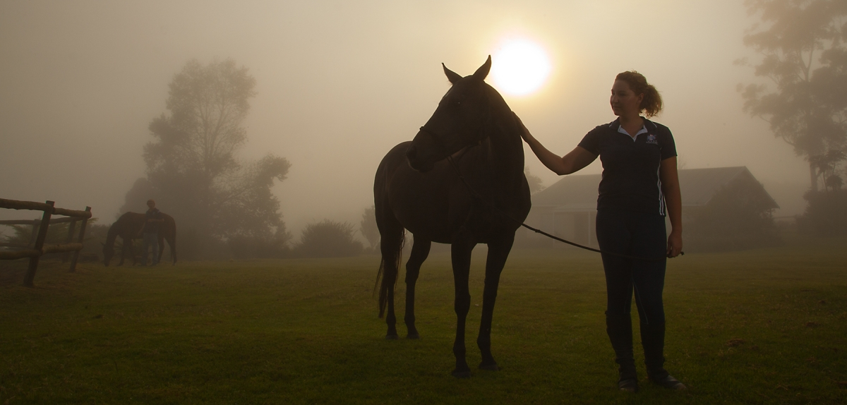 bset academy horse rider at dawn