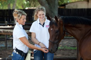 BSET ACADEMY PERFECTING THE EQUINE ATHLETE 1