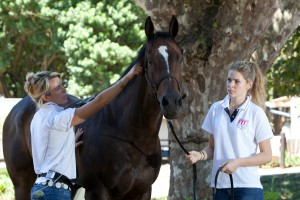 BSET ACADEMY PERFECTING THE EQUINE ATHLETE 2