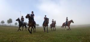 bset academy horse group
