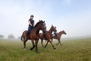 bset academy 3 horses