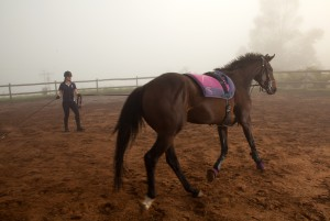 bset academy horse in ring