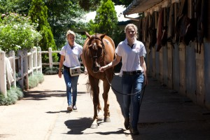 bset academy walking horse stables